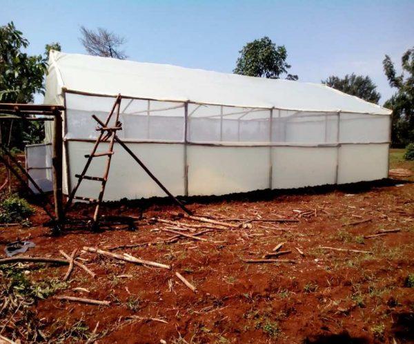 Best wooden greenhouses in Kenya