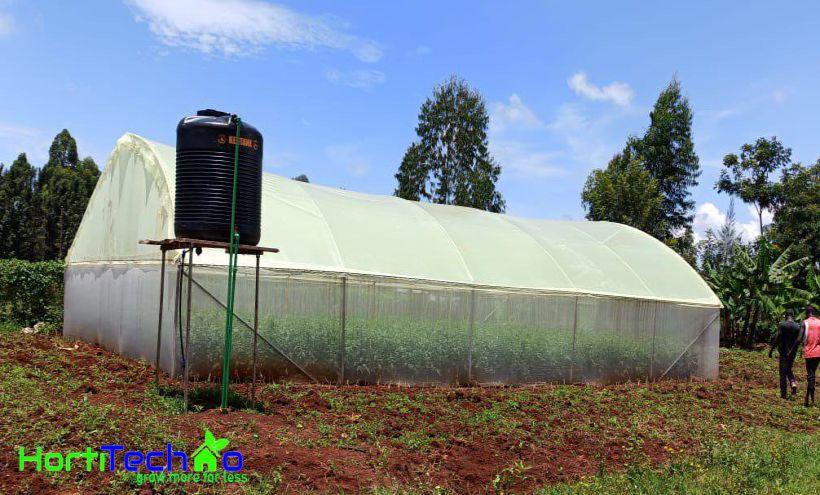 Greenhouse in Kenya